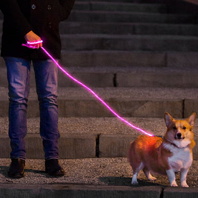 LED Glow in The Dark Pet Dog Leash - ProsperDog