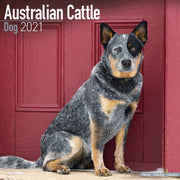 Australian Cattle Dog Wall Calendar 2021 - ProsperDog