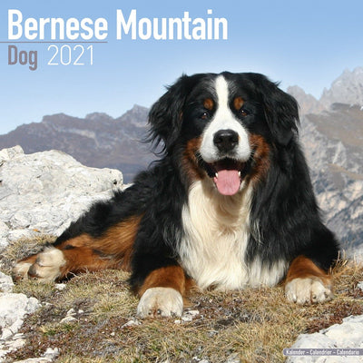 Bernese Mountain Dog Wall Calendar 2021 - ProsperDog