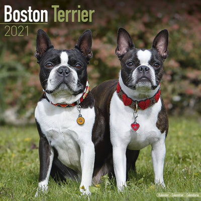 Boston Terrier Wall Calendar 2021 - ProsperDog