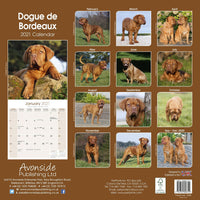 Dogue De Bordeaux Wall Calendar 2021 - ProsperDog
