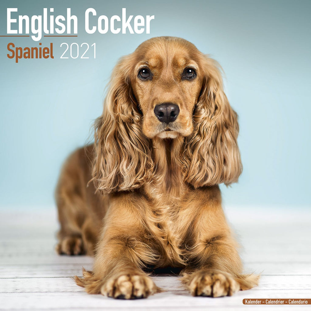 English Cocker Spaniel Wall Calendar 2021 - ProsperDog
