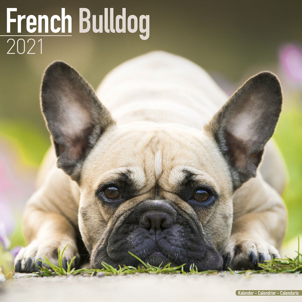 French Bulldog Wall Calendar 2021 - ProsperDog