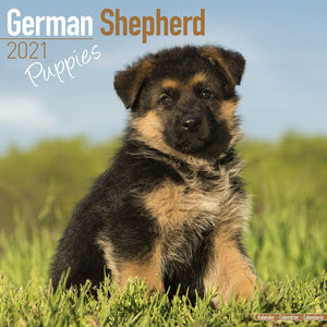 German Shepherd Puppies Wall Calendar 2021 - ProsperDog
