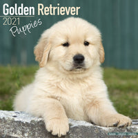Golden Retriever Puppies Wall Calendar 2021 - ProsperDog