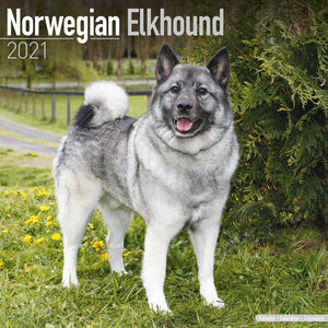 Norwegian Elkhound Wall Calendar 2021 - ProsperDog