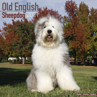 Old English Sheepdog Wall Calendar 2021 - ProsperDog