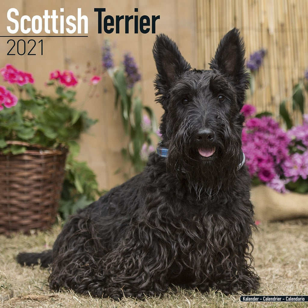 Scottish Terrier Wall Calendar 2021 - ProsperDog