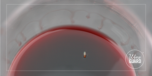 a fruit fly in red wine