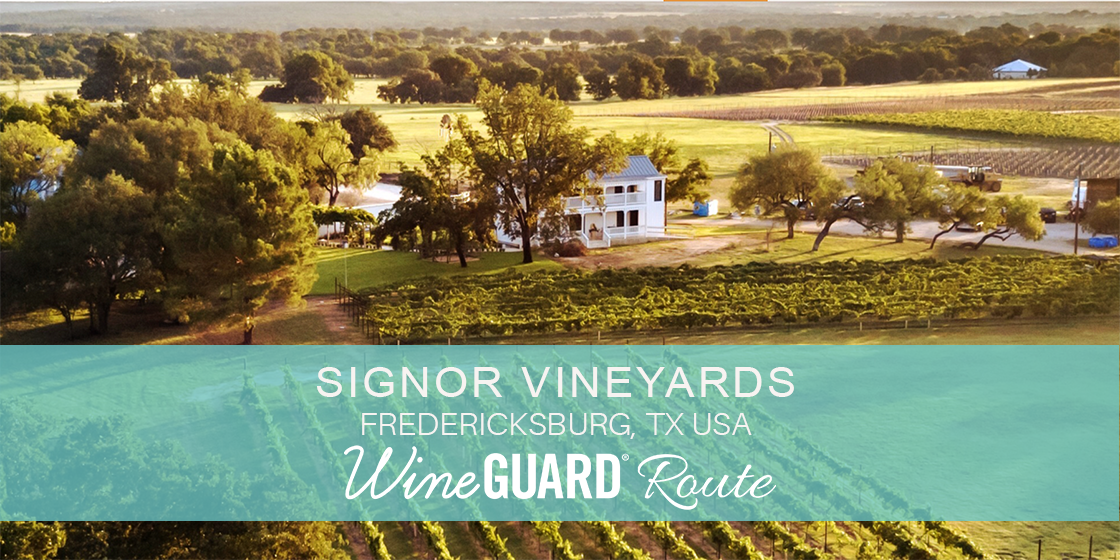 signor vineyards winery