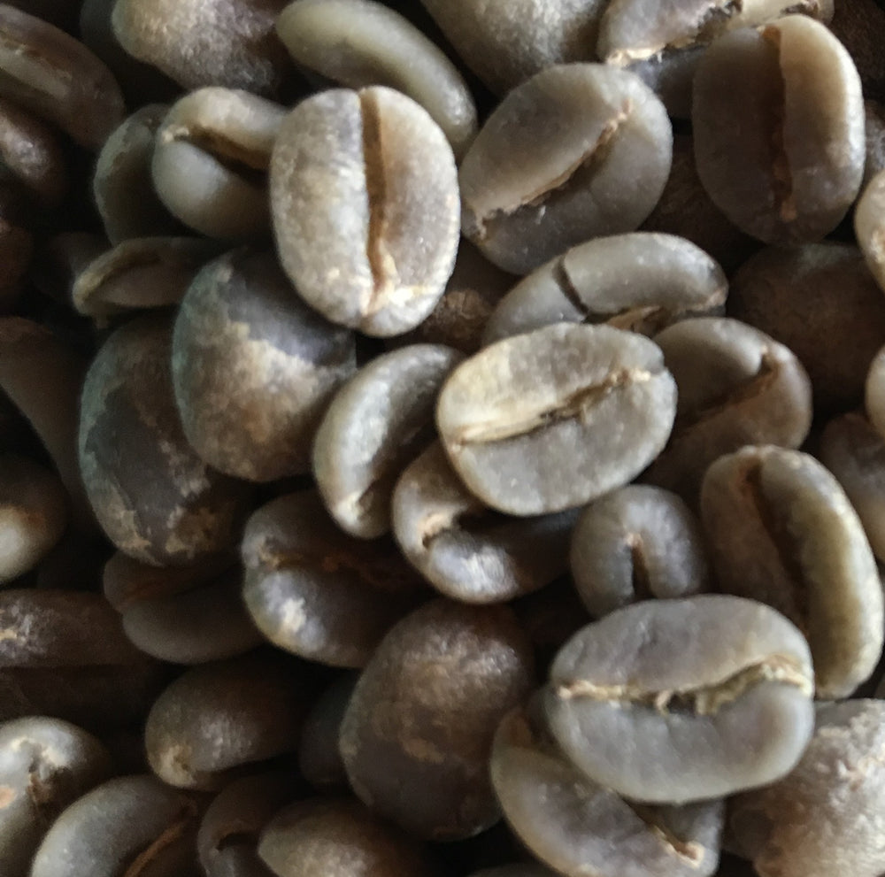 1 Pound Perla Negra Single Estate Ecuadorian Coffee UNROASTED GREEN COFFEE