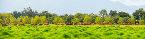 grass-fed-grass-finished-organic-beef-sustainable-regenerative-beef-farming-carbon-neutral
