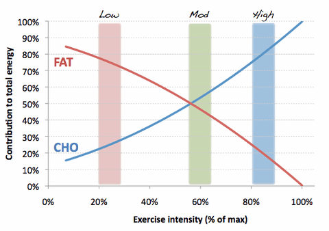 eating-fat-for-primary-fuel-in-exercise-carnivore-keto-diets