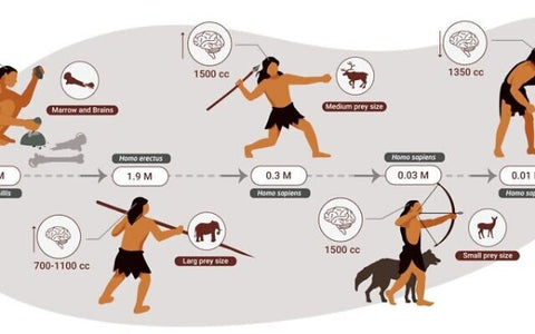 human-history-human-brain-meat-eating-carnivore-diet-before-agriculture