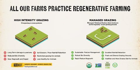 sustainable-beef-regeneratively-raised-beef-organic-grass-fed-eco-friendly-pasture-rotational-grazing