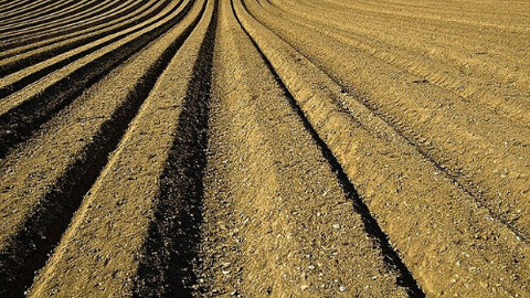 sustainable-farming-soil-mon-cropping-pesticides