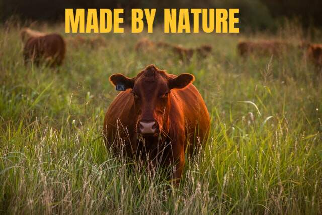 side-of-beef-grass-fed-organic-bulk-beef-share