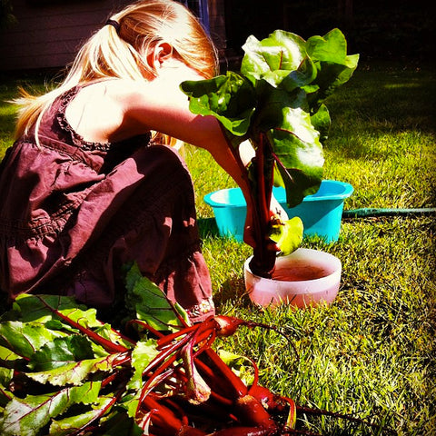 Kid Friendly Organic Gardening Ideas