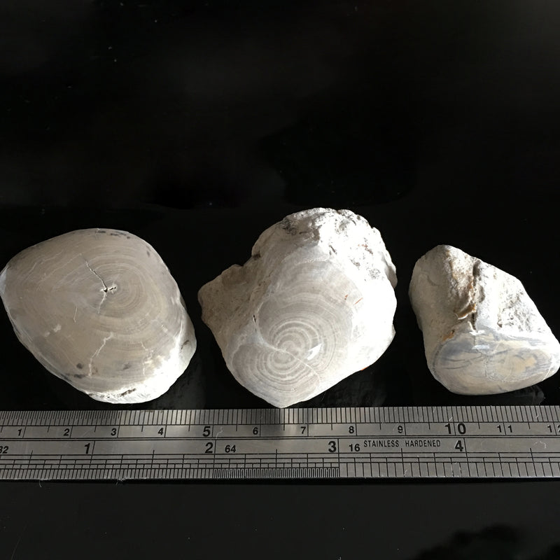 Triassic Lune River branch pieces