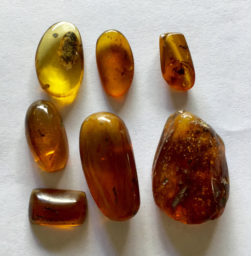 7 pieces Burmese Amber