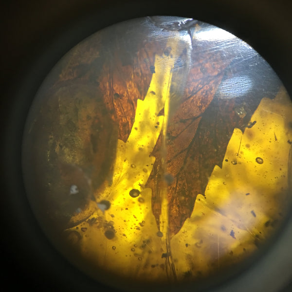 Copy of Burmese Amber with leaf details