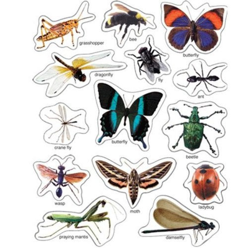 PHOTO- INSECTS STICKERS