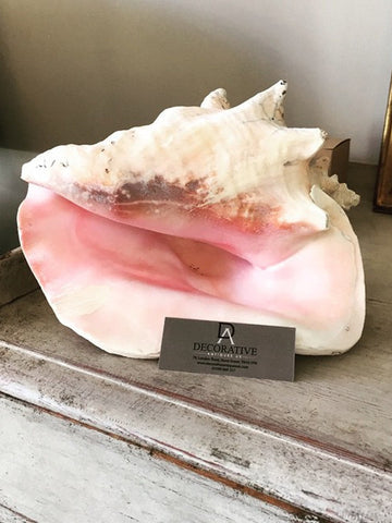 Lovely Large Conch Shell - Decorative Antiques UK  - 1