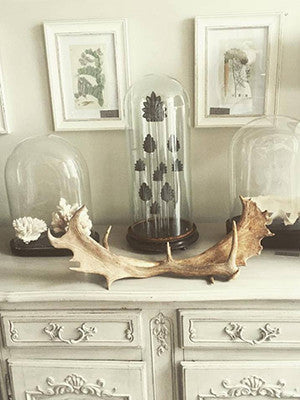 Pair Vintage Fallow Deer Antlers - Decorative Antiques UK  - 1
