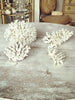 Gorgeous Collection of Vintage White Coral - Decorative Antiques UK  - 1