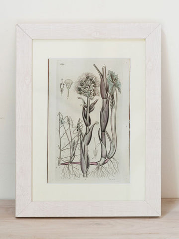 Framed Antique Swedish Botanical bookplates