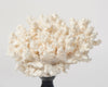 Vintage white coral on stand