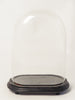 Antique French Oval Display dome on original base