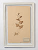 Beautiful Framed Antique French Herbier 1