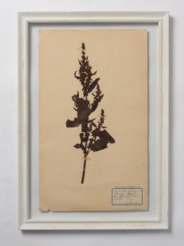 Beautiful Framed Antique French Herbier 3