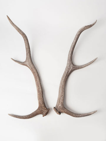 Pair Beautiful Deer/Stag Antlers