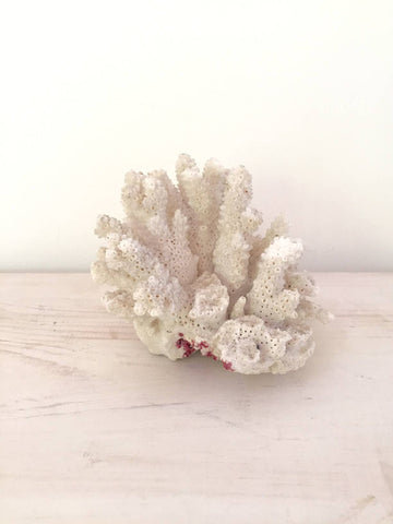 Vintage White Coral