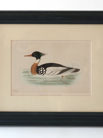 Collection Antique Duck Bookplates, mounted & framed