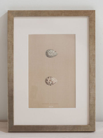 Antique 19th Century Egg prints, mounted and framed - Decorative Antiques UK  - 4