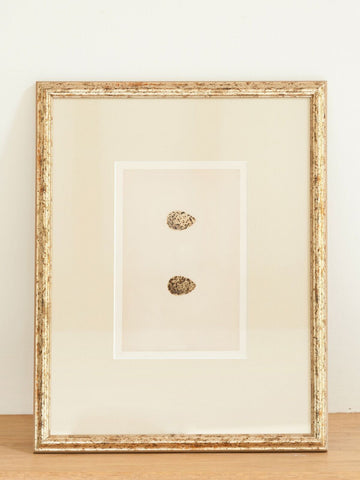 Antique 19th Century Bird Egg Bookplates, mounted and framed