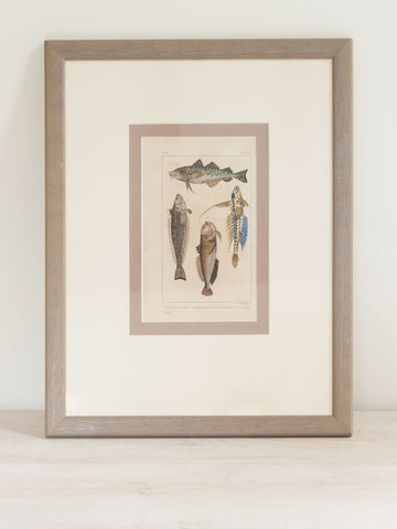 Antique French Fish Bookplates, mounted and framed