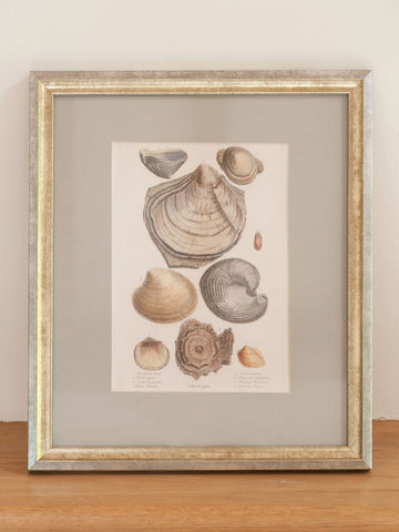 Antique 19th Century Hand Coloured Shell Engravings, mounted and framed