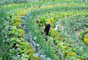 Top 5 Ways Permaculture Can Improve Your Garden