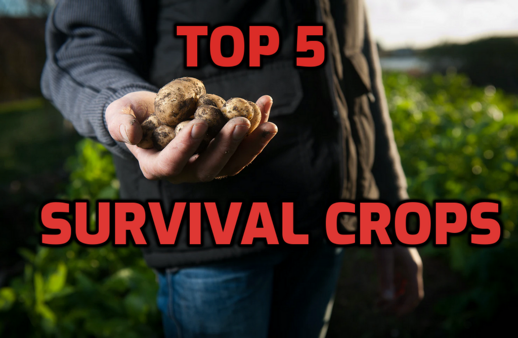 Top 5 Survival Crops to Grow During a Food Shortage