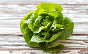 Sweet Baby Lettuce Mix