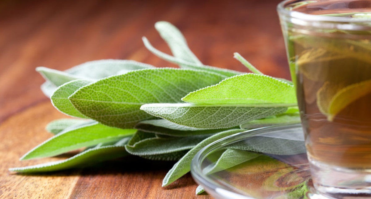 Make sage tea yourself - easy and healthy
