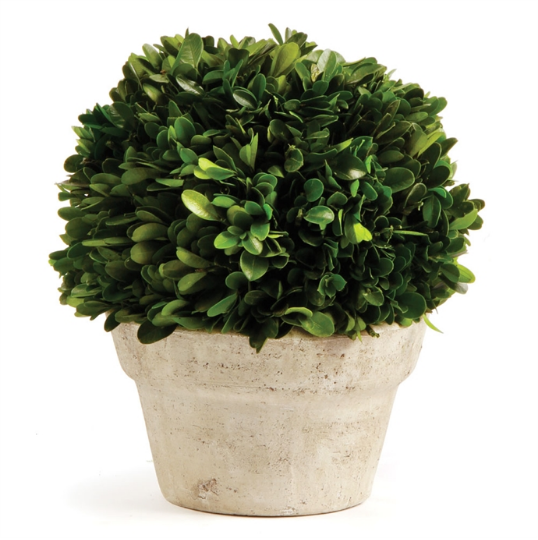 Boxwood Ball in Concrete Pot