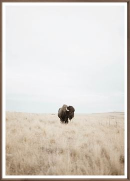 Buffalo in the Plains Wall Art