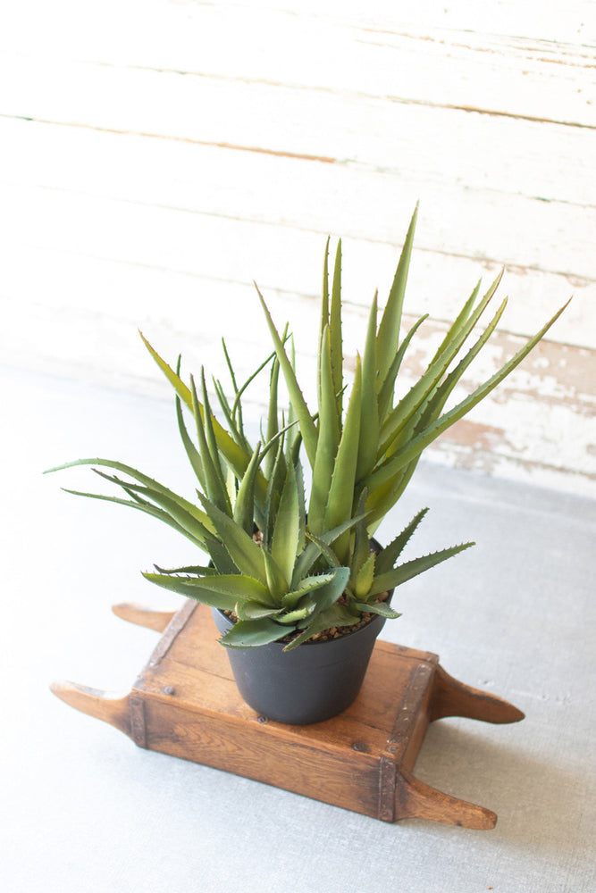 Load image into Gallery viewer, Potted Aloe Cluster