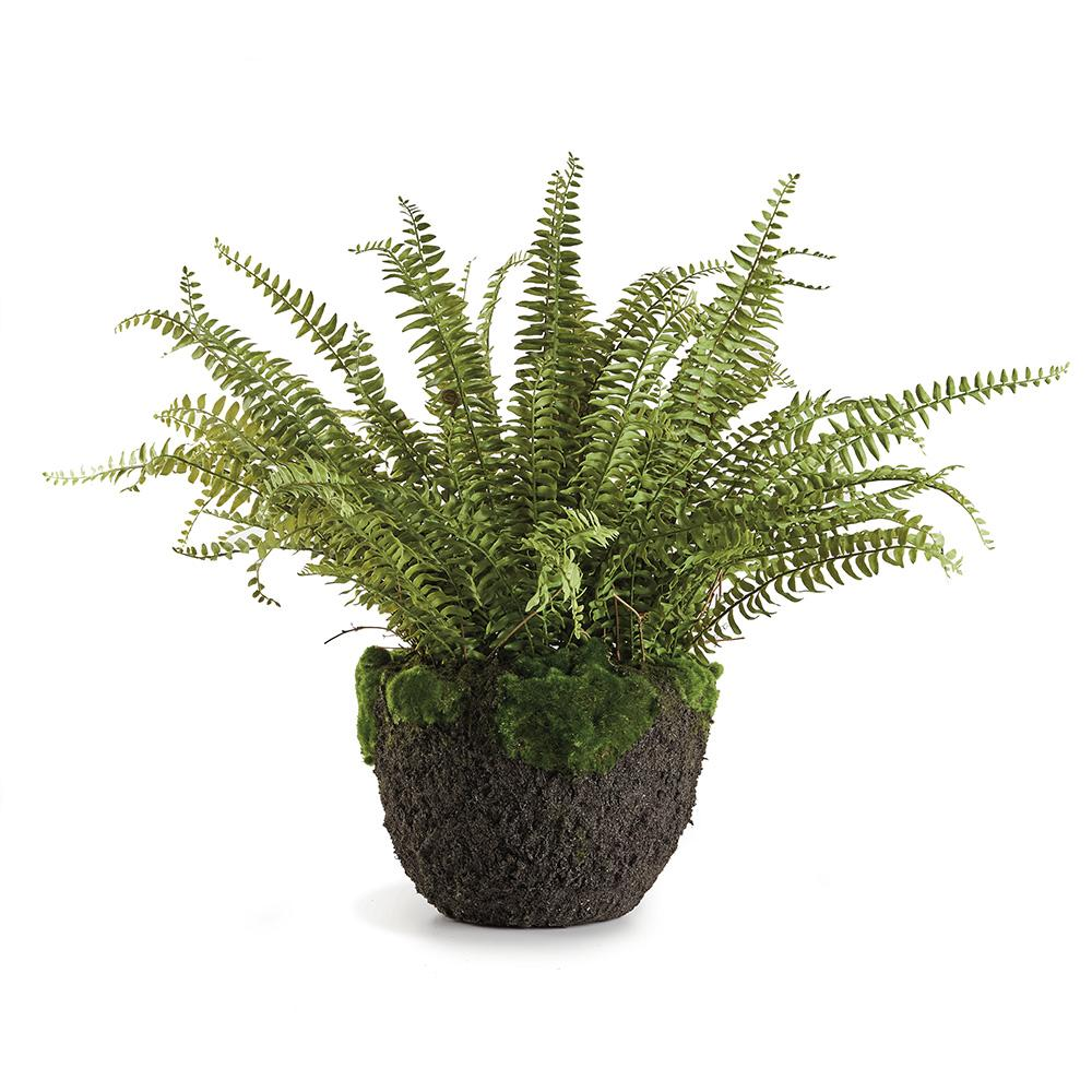"Load image into Gallery viewer, 30"" Grand Boston Fern"