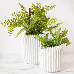"12"" Realistic Boston Fern"